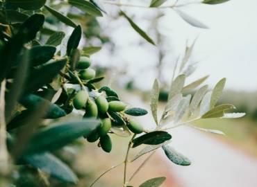 Information sur les produits biologiques venant d'Italie